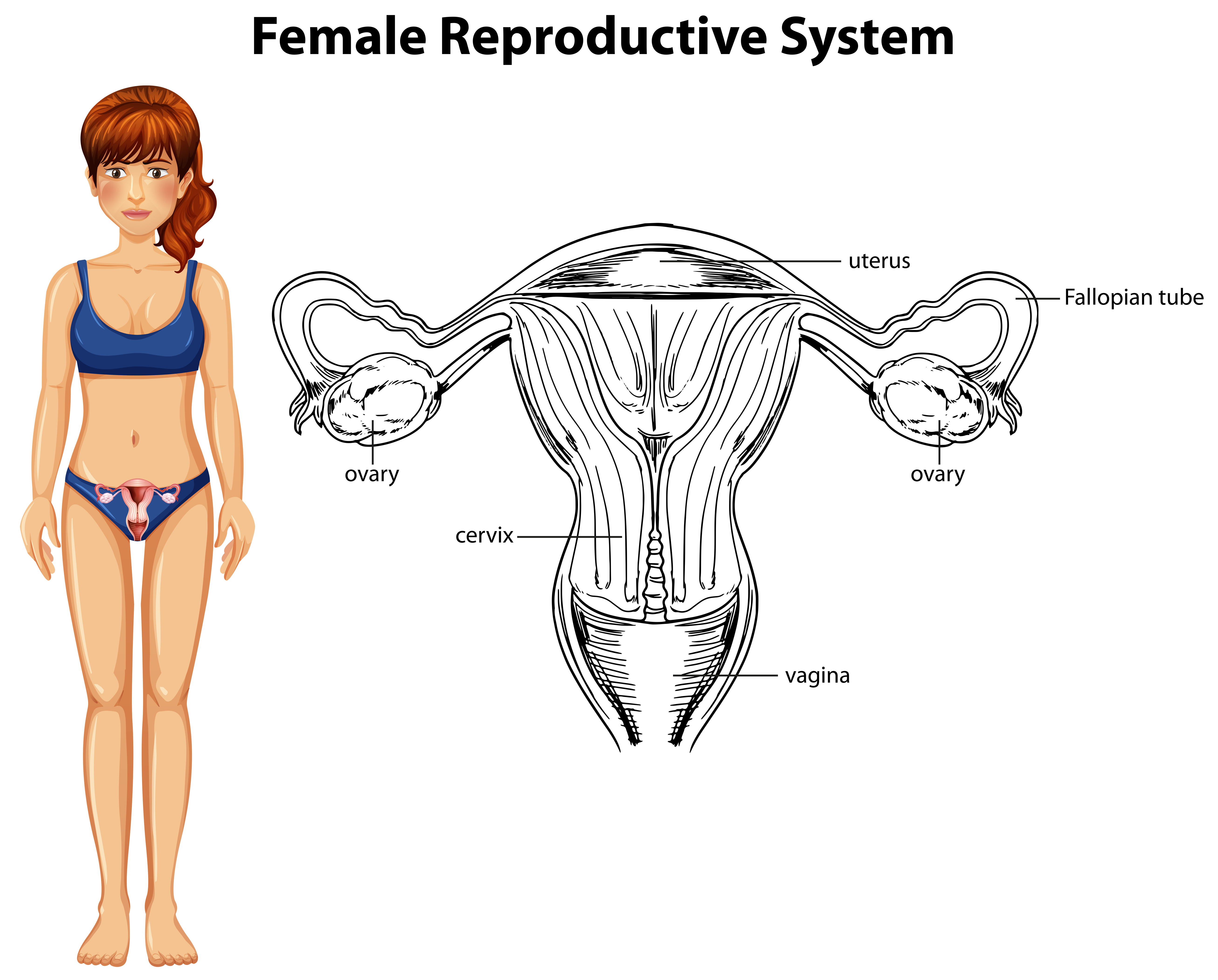 Healthy Reproductive System